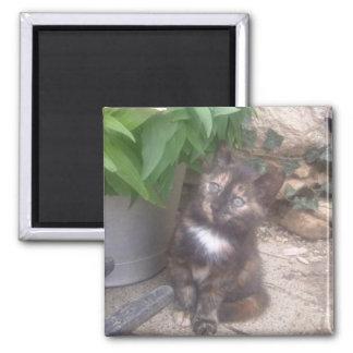 Kitty Cat fridge Magnet