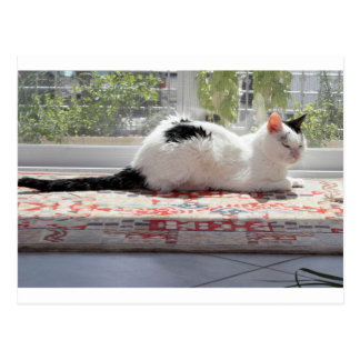 Kitty Cat Relaxing in a Sunny Window Postcard