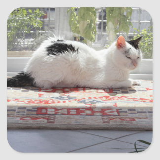 Kitty Cat Relaxing in a Sunny Window Square Sticker