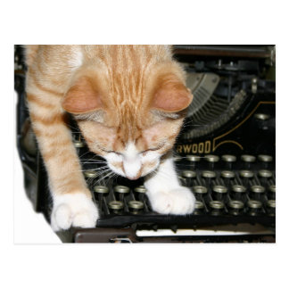 Kitty cat types postcard
