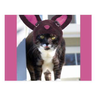 Kitty Cat Wearing Bunny Ears Postcard