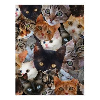 Kitty Collage Postcard
