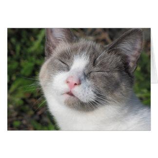 Kitty Face Card