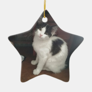 Kitty Fun! Ceramic Star Decoration