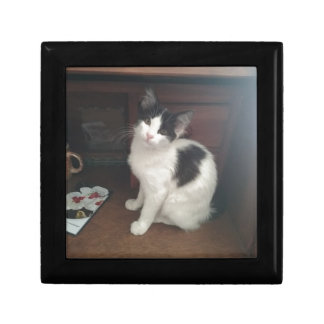 Kitty Fun! Gift Box