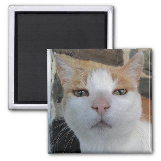 Kitty Head Shot Magnet