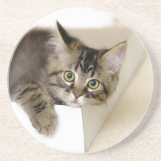 Kitty in a Box coaster