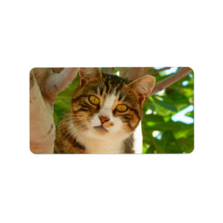 Kitty in a Tree Address Label