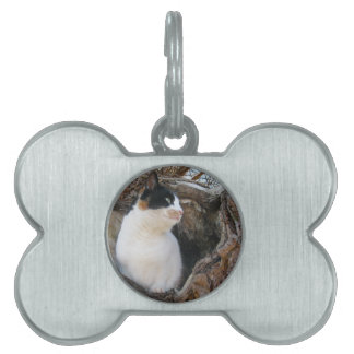 Kitty in a Tree Hollow Pet ID Tag