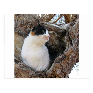 Kitty in a Tree Hollow Postcard