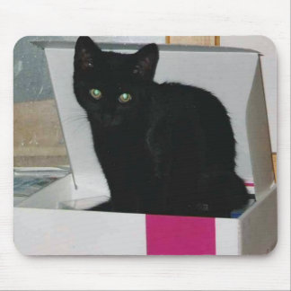 Kitty in Box (color) Mouse Pad