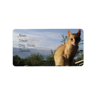 Kitty on the Fence Address Label