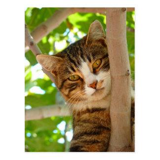 Kitty on the tree postcard