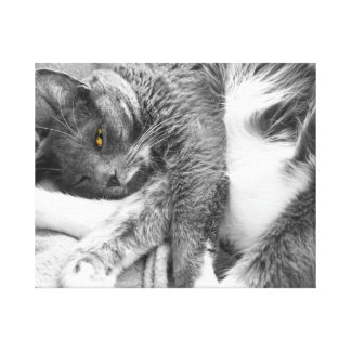 Kitty Relax Gallery Wrapped Canvas