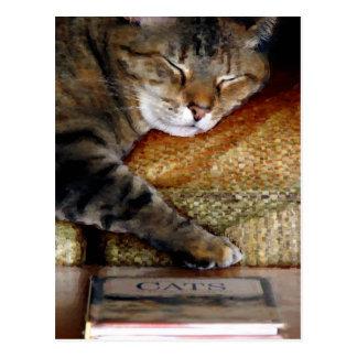 Kitty Sleep Book Postcard