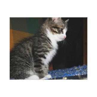 Kitty the Kitten Canvas Print