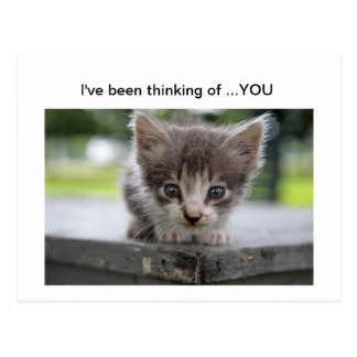 kitty thinking of you postcard