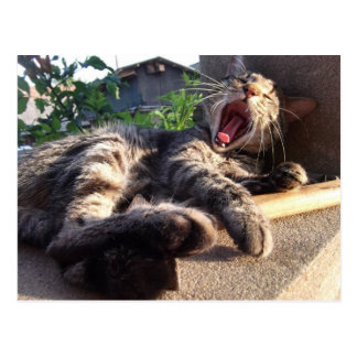 Kitty yawns postcard