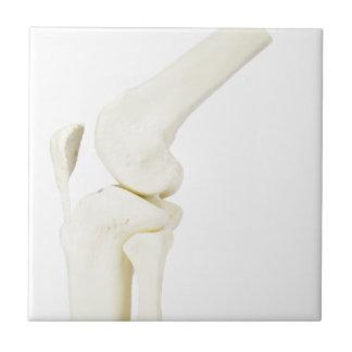 Knee joint model of human leg ceramic tile