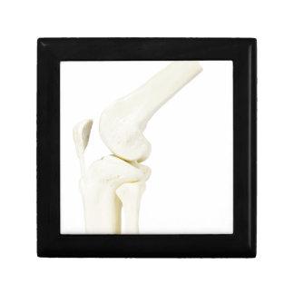 Knee joint model of human leg gift box