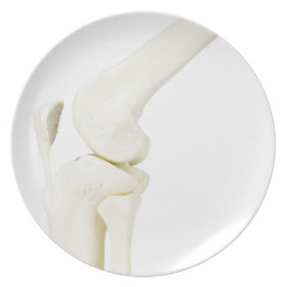 Knee joint model of human leg plate