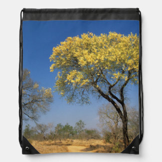 Knob Thorn Acacia, (Mimosoideae), Mala Mala Game Drawstring Bag