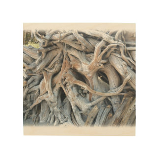 Knotty Tree Root Image Printed on Wood Wood Wall Art