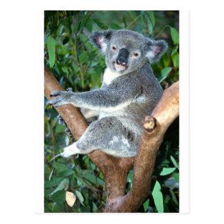 koala2 postcard