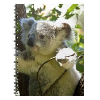 Koala Bear Aussi Safari Peace Love Nature Destiny Notebooks