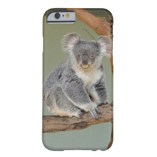 Koala Bear Barely There iPhone 6 Case