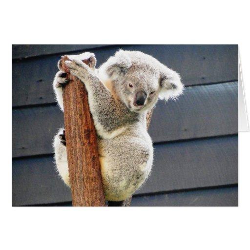 Koala Bear Greeting Cards