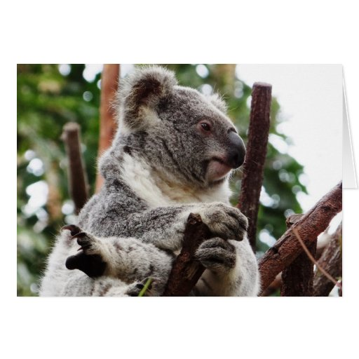 Koala Bear Cards