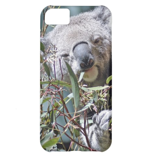 Koala bear case for iPhone 5C
