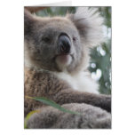 Koala Bear Facts Greeting Card