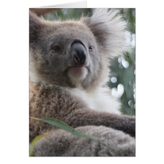Koala Bear Facts Greeting Card