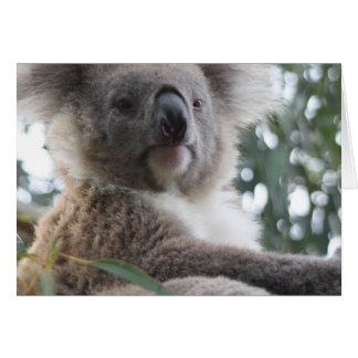 Koala Bear Facts Greeting Cards
