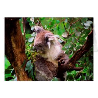 Koala Bear Greeting Card