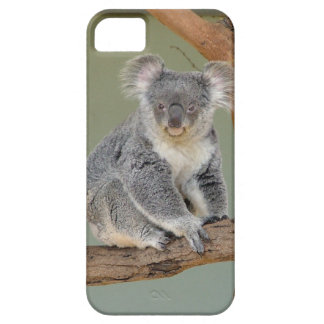 Koala Bear iPhone 5 Cases