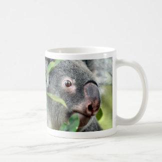 koala bear looking right close up eye  c.jpg mugs