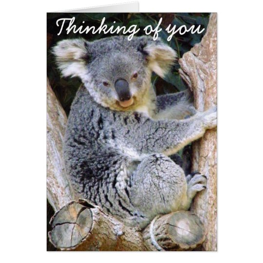 Koala Bear Love_ Card