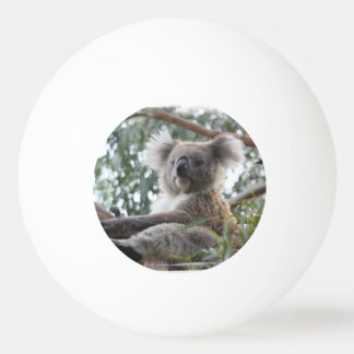 Koala Bear Ping Pong Ball