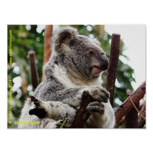 Koala Art And Design Reviews