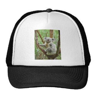 Koala Bear Sitting On The Tree At Perth Zoo Trucker Hat