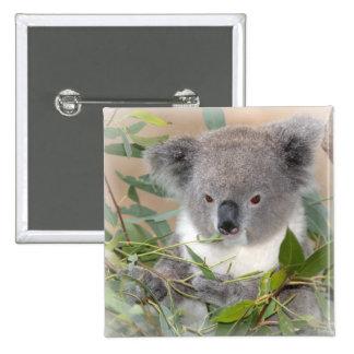 Koala Bear Square Pin