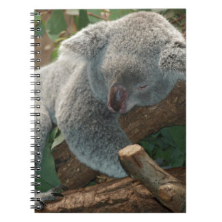 Koala Bears Aussi Outback Destiny Nature Notebook