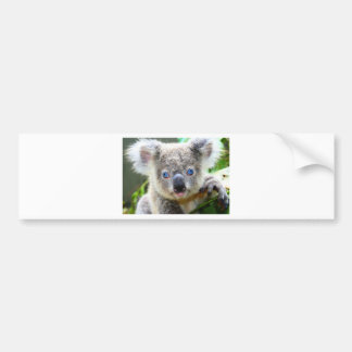 Koala Bears Bumper Sticker