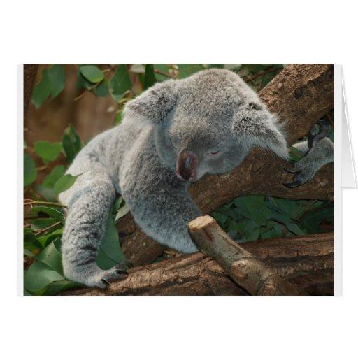 Koala Bears Love Animals Destiny Gifts Card