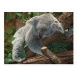 Koala Bears Love Animals Destiny Gifts Post Card