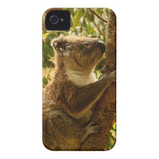 Koala iPhone 4 Case-Mate Case