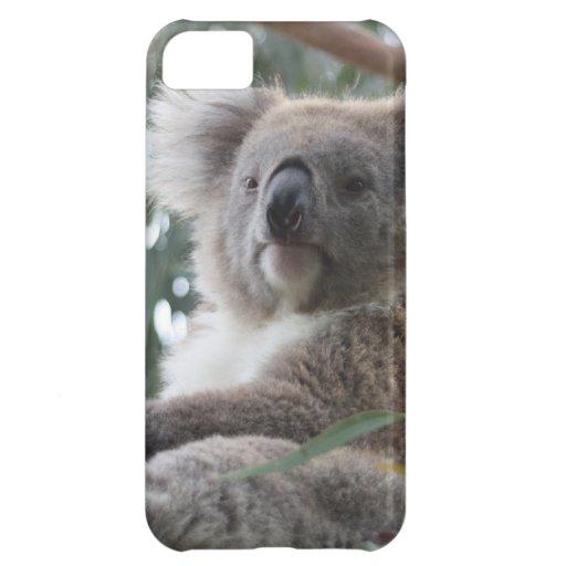 Koala iPhone 5C Cover